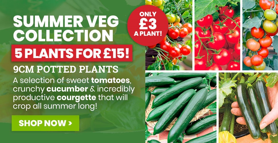 View Our Summer Cropping Veg Collection