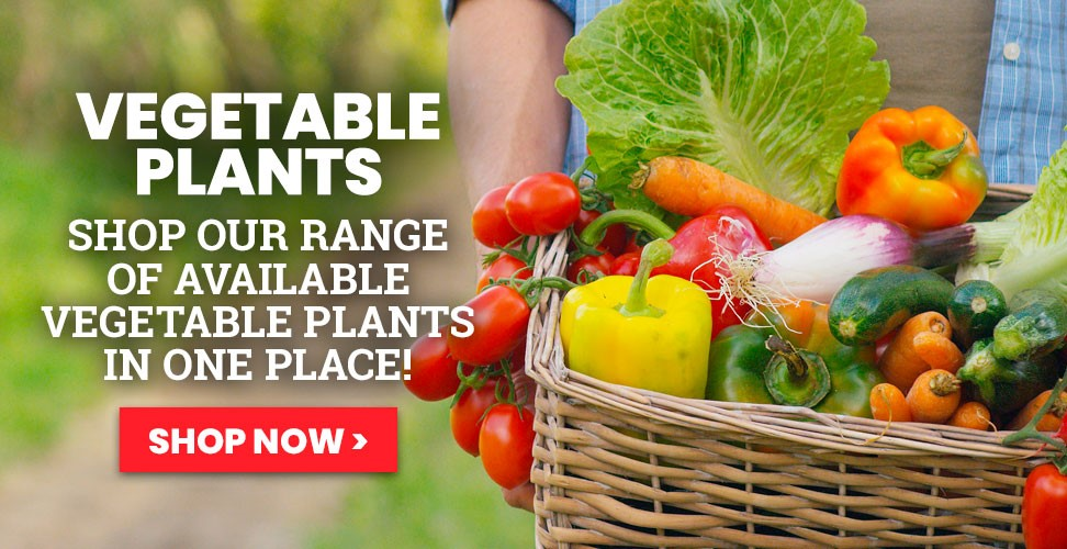 View our Vegetable plants that are currently in stock
