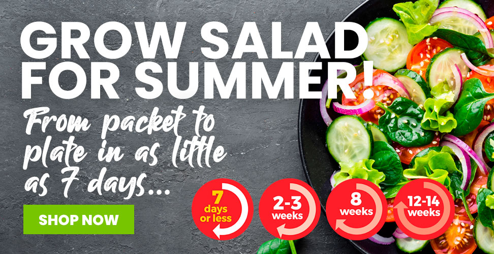 Discover Our New Grow Salad For Summer Range